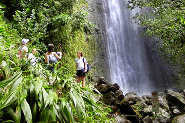Manoa Waterfall Hike