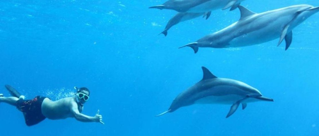 Swimming with wild Spinner Dolphins