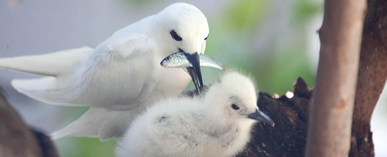 #11 – Coastal Birding Adventure